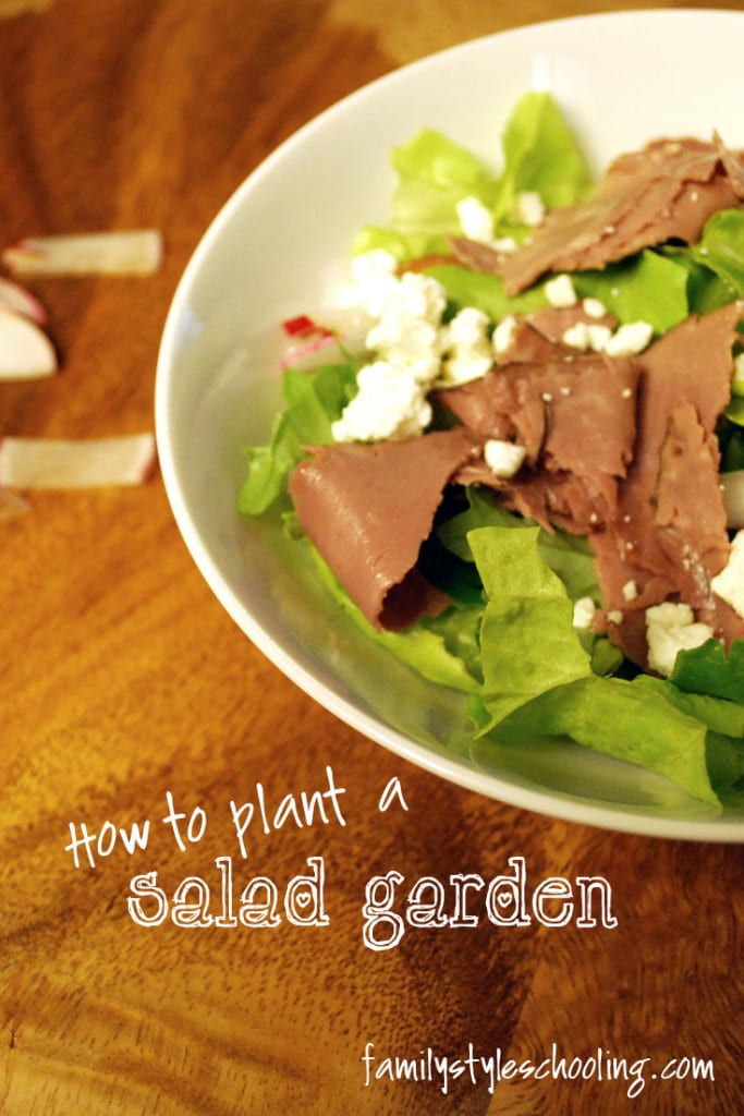 how to plant a salad garden