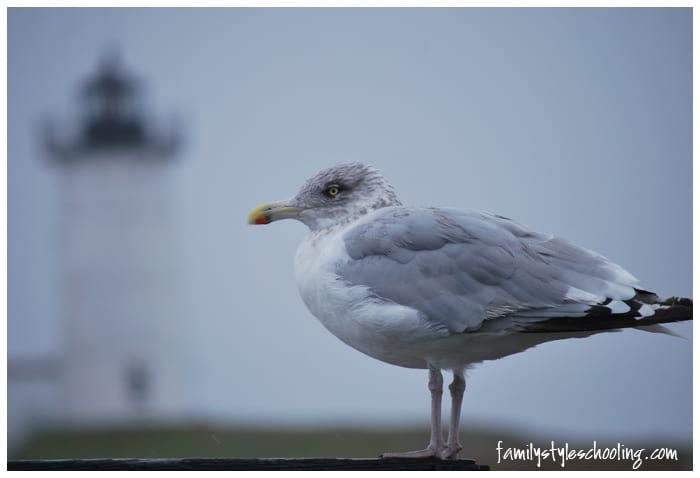 Maine bird lighthouse