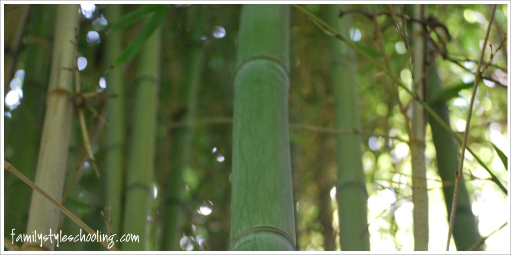 The beauty of bamboo.