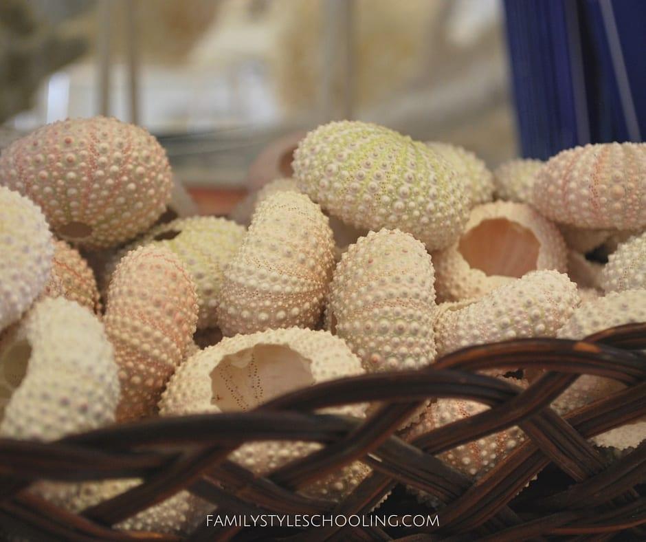 Galveston shells